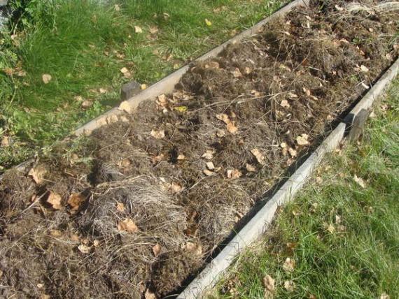 Органическое земледелие, пермакультура: 5 способов сделать почву мягкой и плодородной