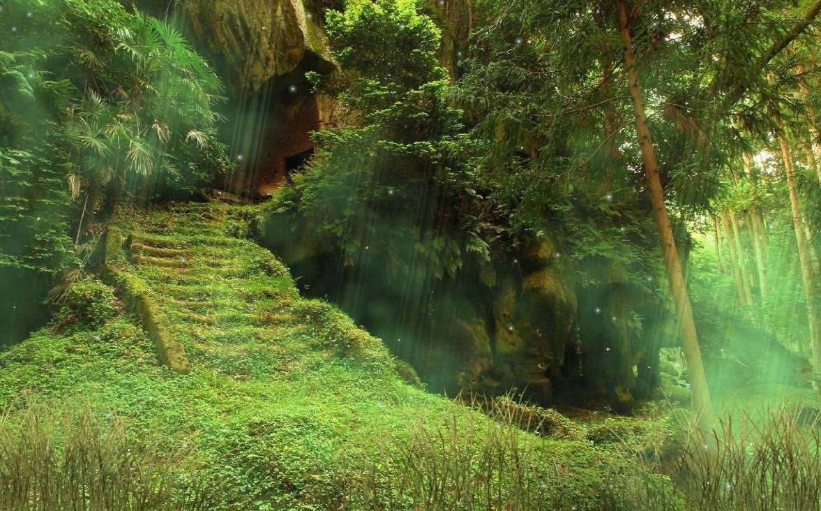Самые «зловещие» леса мира