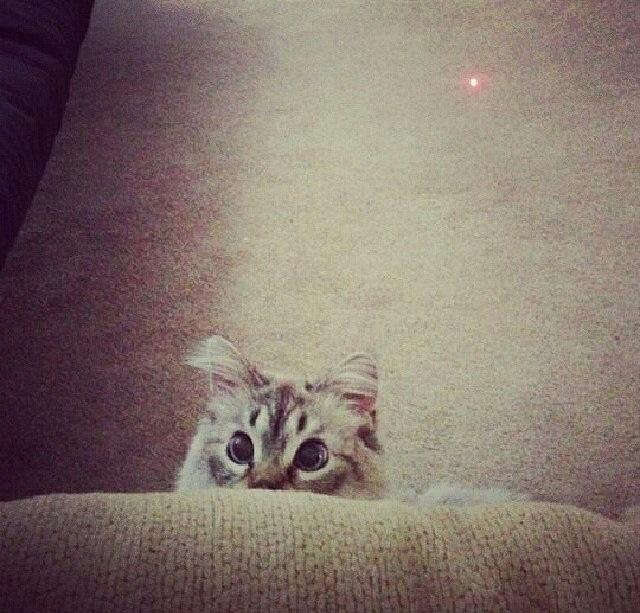 Понял, где на самом деле лазер животные, смех, снимок