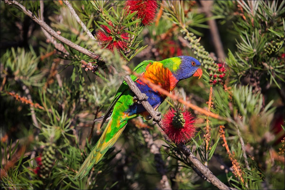 Животный мир Австралии - фотопрогулка