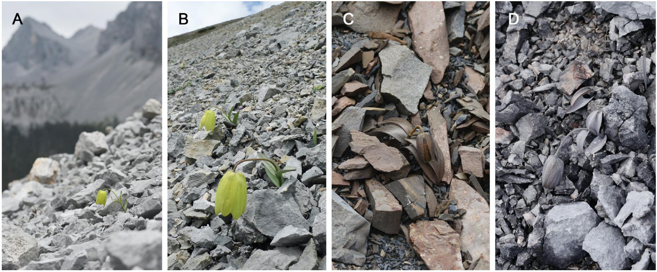 Китайские растения научились изменять свой цвет, чтобы их не замечали и не собирали люди Культура