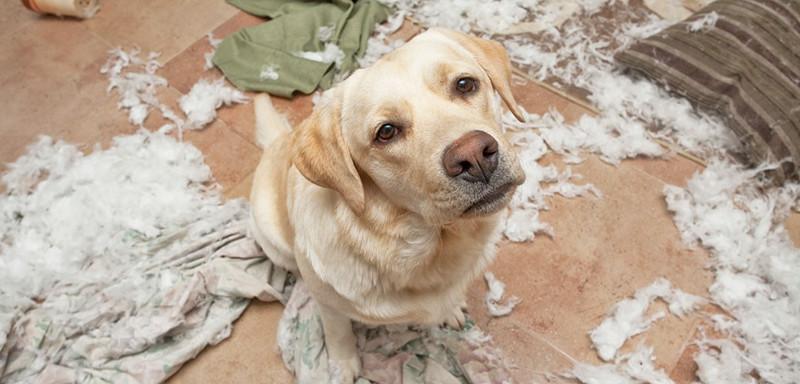 Это все подушка виновата дом, животные, проступок, шалость