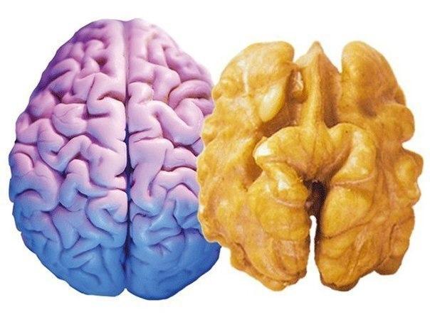 5 продуктов улучшающих память