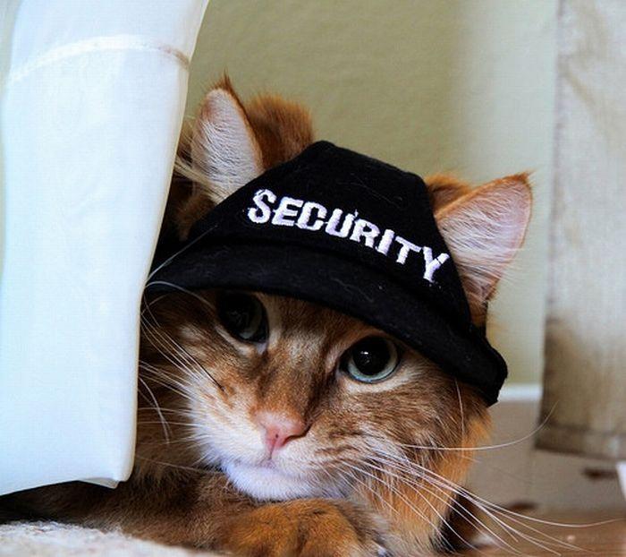 Картинки прикольные коты в кепках, открытки день