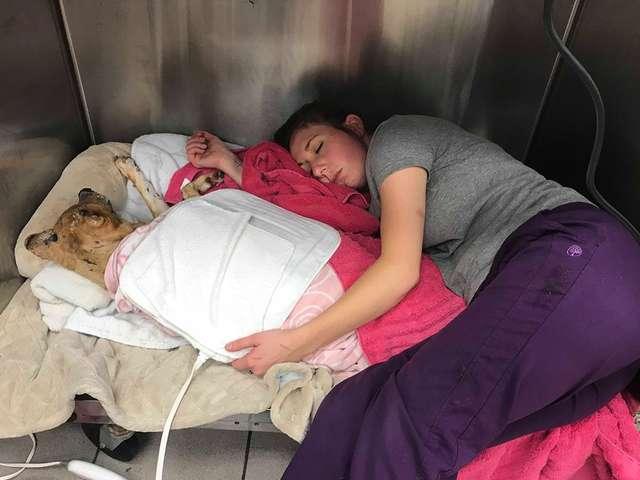 Собака чудом спаслась при пожаре! Но хозяева не захотели забирать ее обратно, оставив у врача