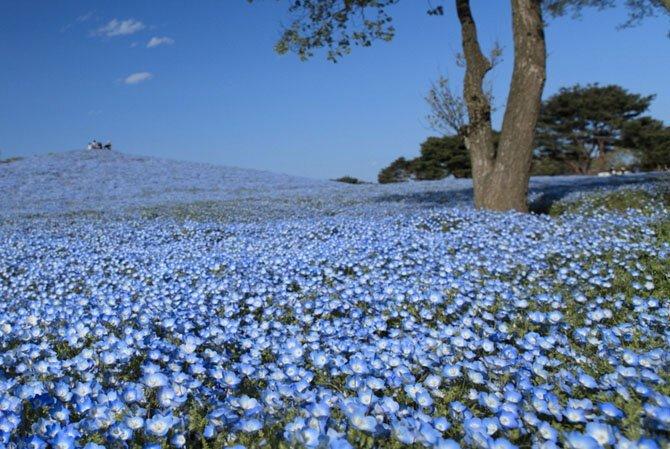 Парк Хитачи, Япония путешествия, факты, фото