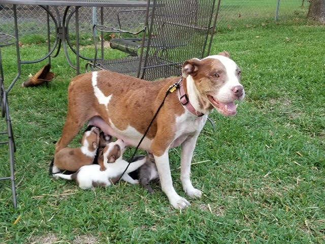 «За что вы так со мной?»: несчастную собаку выгнали сразу после появления на свет щенков животные
