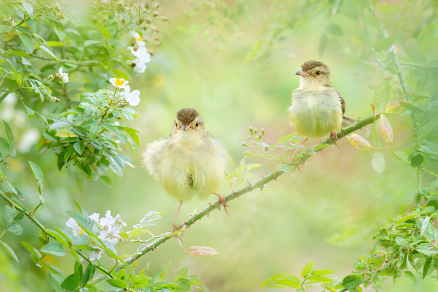 ~ Cute Summer ~, автор — FuYi Chen на 500px.com
