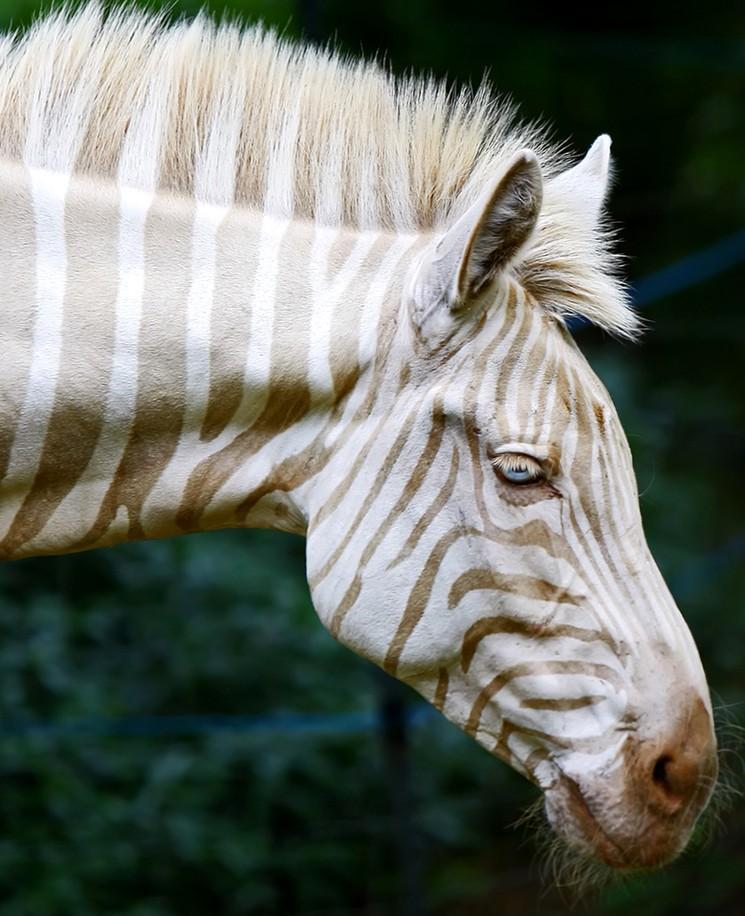 Фото животных альбиносов