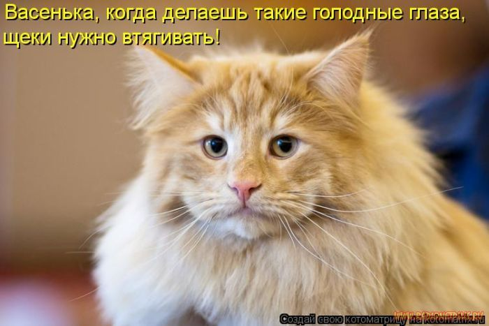 Кошки, такие кошки!