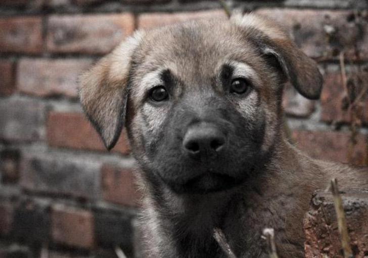 картинки коричневых щенков дворняги