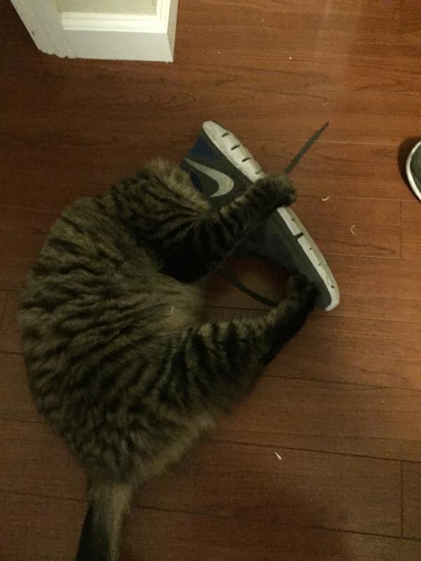 Обувь для кошки