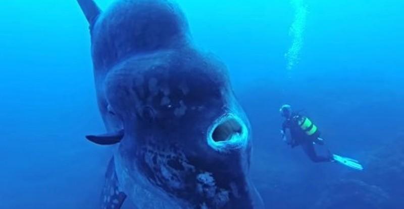 1. Гигантская луна-рыба вид, вымысел, гигант, животные, мир, правда, природа, фото