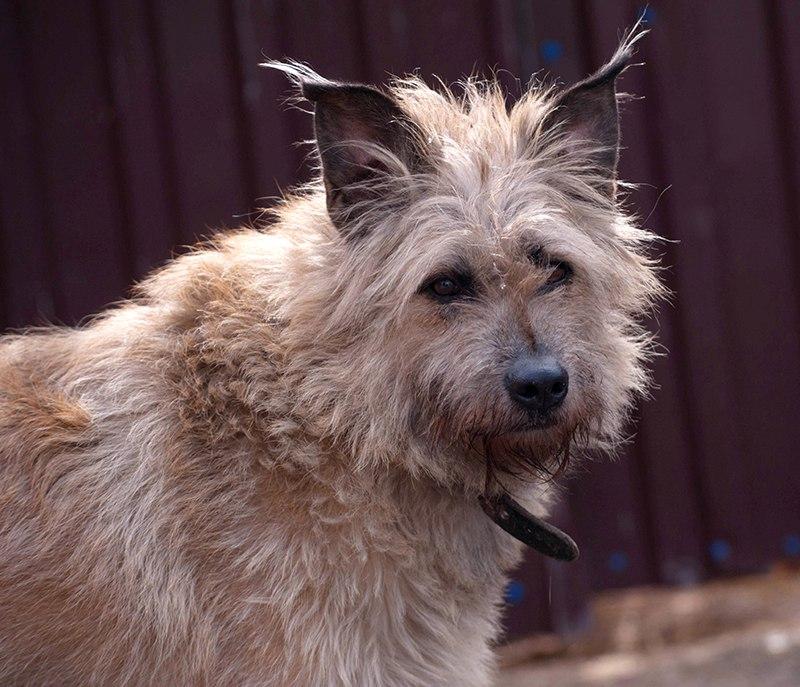 Две сестры 4 года были в разлуке бездомная собака, пес, приют, собака, терьер