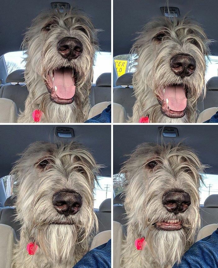 """4. """"Реакция моего пса на то, что я не свернул к собачьей площадке"""" волкодав, волкодавы, домашние питомцы, забавные собаки, собаки, собаки и дети, собаки и хозяева, фото собак"""