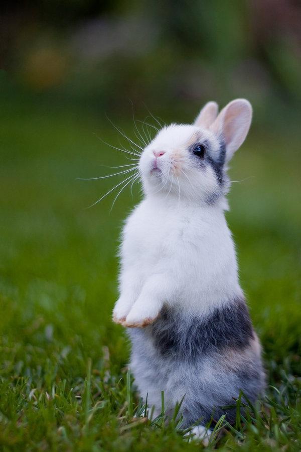 Красивые картинки с зайками, школа юбилеем