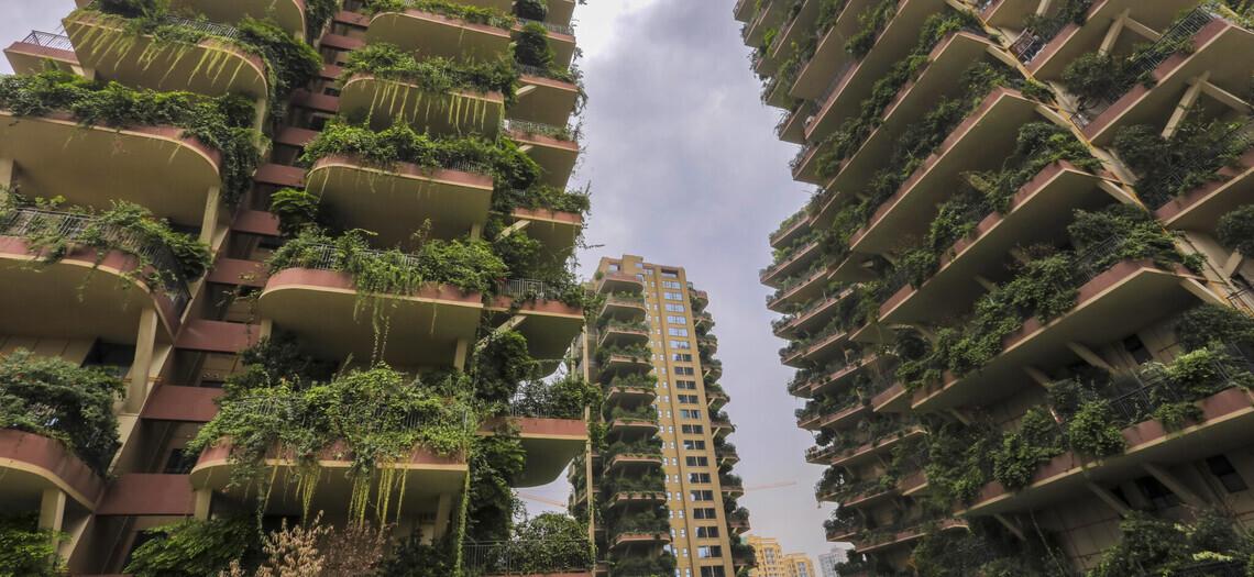 Фото пустующих башен-джунглей, где живут всего 10 семей: выглядит это как декорации к фильму-катастрофе