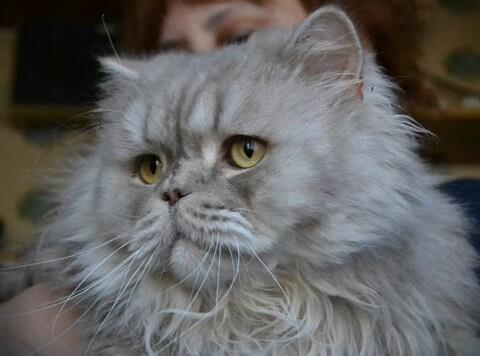В связи со смертельной болезнью хозяйки трем котам нужен новый дом