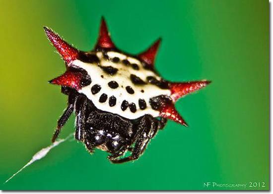 Самые ужасающие пауки