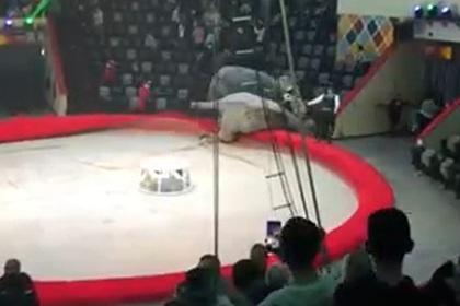 Слоны подрались на представлении в российском цирке Из жизни
