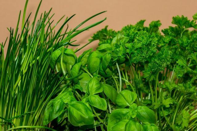 Как правильно заморозить зелень, сохранив витамины