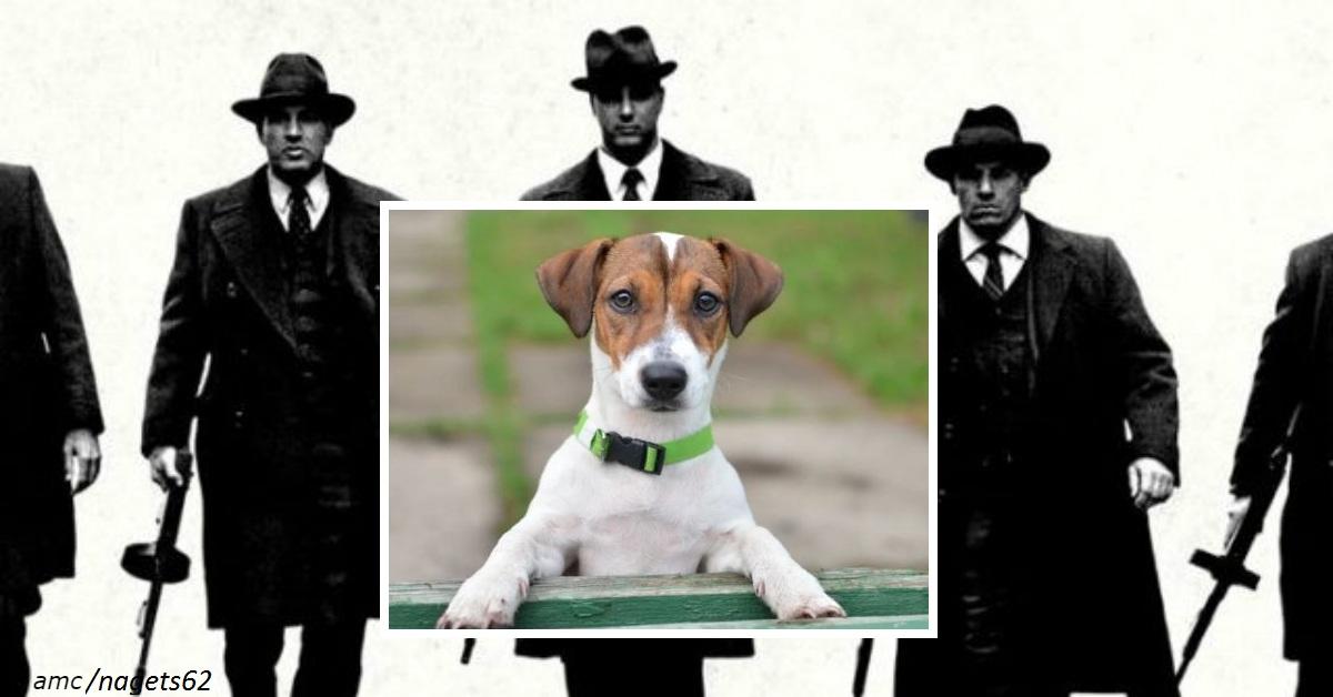 Итальянская мафия предлагает вознаграждение за голову этого пса. Вот чем он им насолил