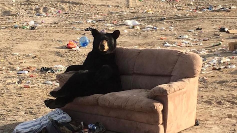 Жительница Канады сфотографировала развалившегося на диване медведя