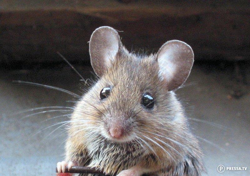 Как мы боролись с мышами - забавный случай из жизни