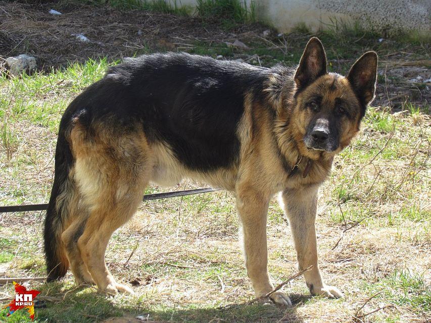 В Екатеринбурге хозяева нашли своего пса спустя семь лет по клейму, поставленному в детстве