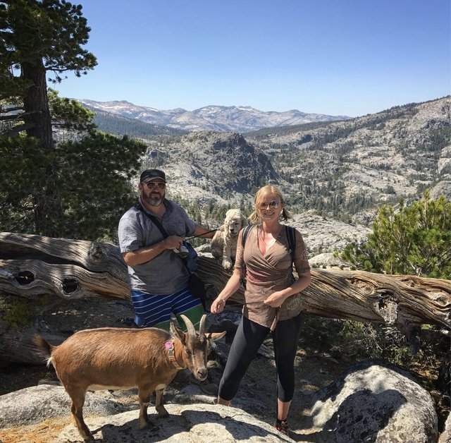 Пара путешествует по миру вместе с собакой и домашней… КОЗОЙ