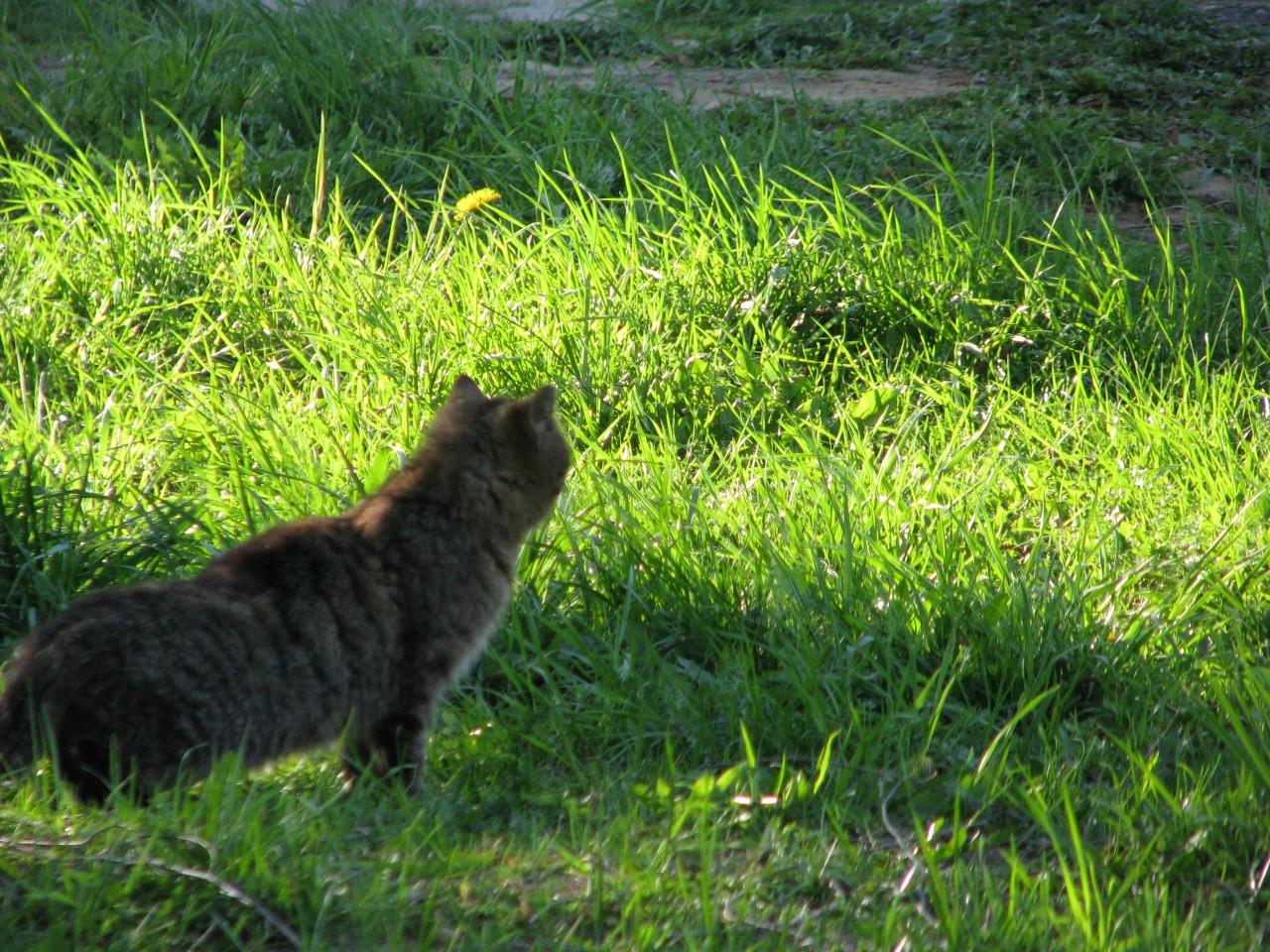 Братья наши меньшие: страшная месть кота?