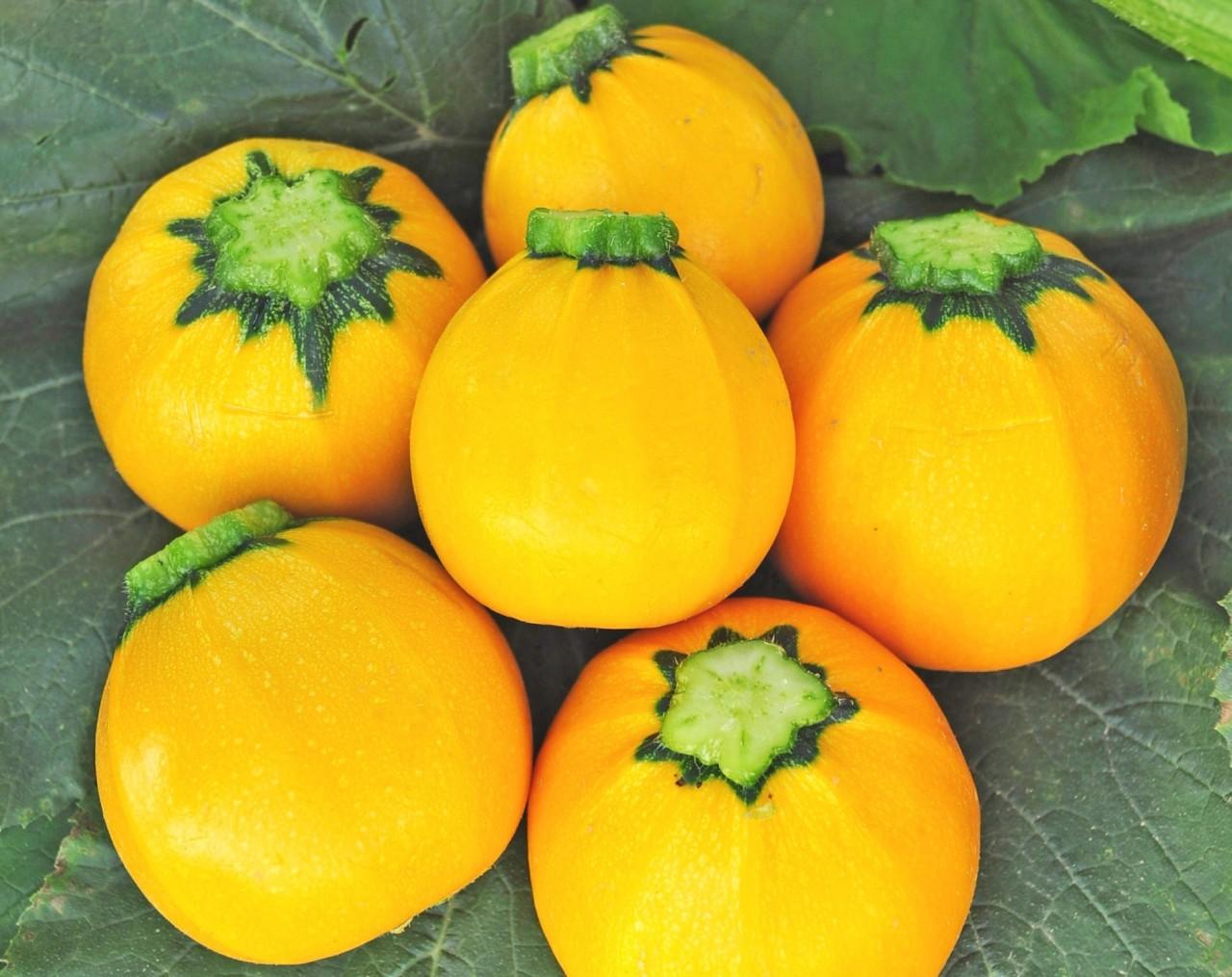 Кабачок апельсинка – удачная новинка!