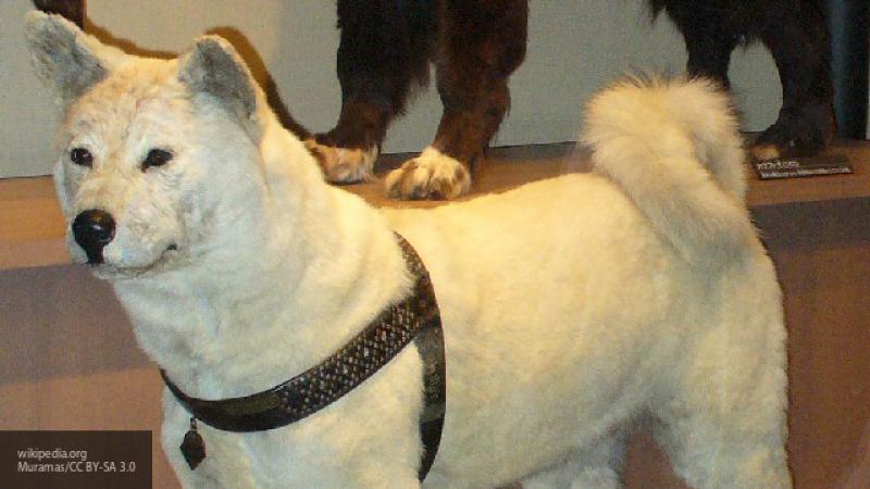 На Урале появится памятник собаке, которая два года ждала погибшего в ДТП хозяина на остановке