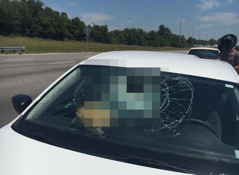 Черепаха прилетела в лобовое стекло автомобиля