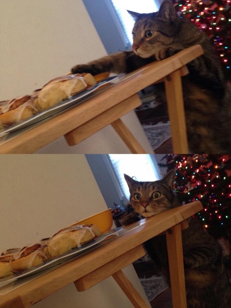"""""""Спустя секунду после того, как я сказал, что ему нельзя этого делать"""" гифки, животные, кошки, приколы"""