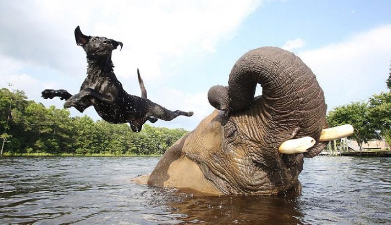 Слон и мартышка смешные картинки, открытки для