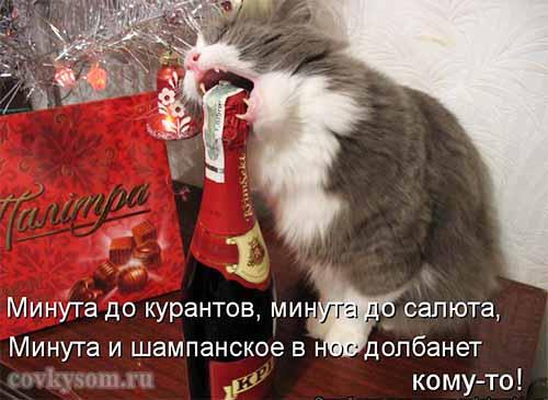Кулинарные котоматрицы 32 (к…