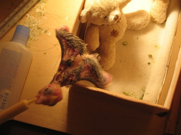Видя шприц он бежал на него как безумный: дети, мама, птицы