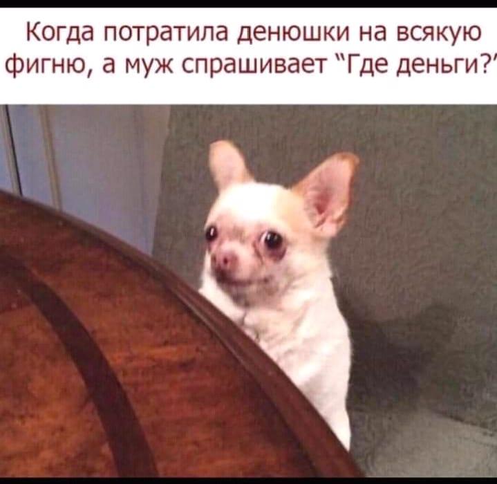 Официант с подносом подходит к клиенту ресторана:  - Кофе? Чай?... Весёлые,прикольные и забавные фотки и картинки,А так же анекдоты и приятное общение