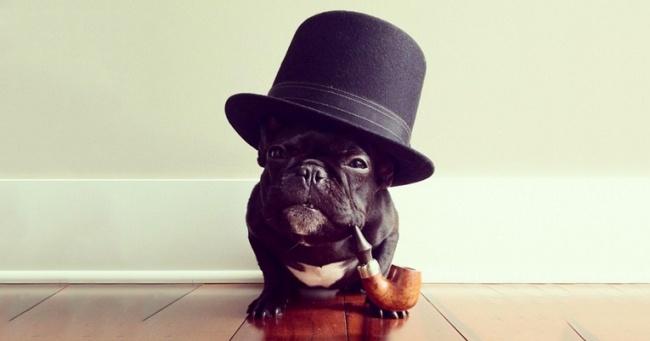 Он спросил менеджера отеля, можно ли остановиться с собакой. Ответ бесценен