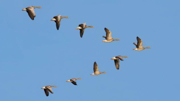 Как птицы ориентируются в полёте загадки, природа