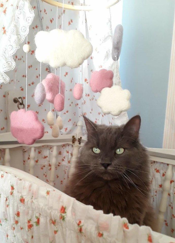 А что, эта кроватка не для меня? животные, кот, коты, кошки, приколы с животными, смешно, фото, юмор