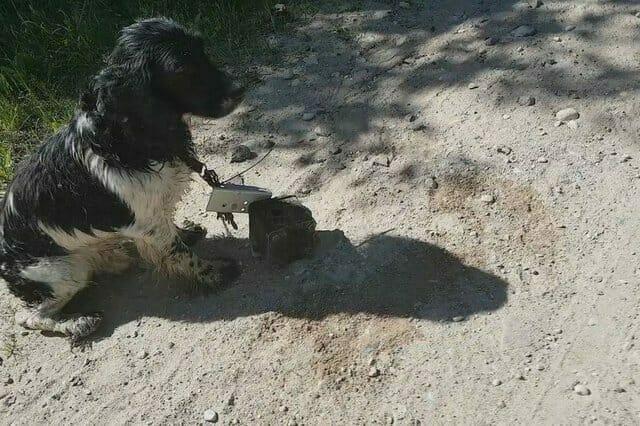 Женщина увидела испуганную собаку у реки, когда она подошла ближе и увидела шею собаки, то испугалась…