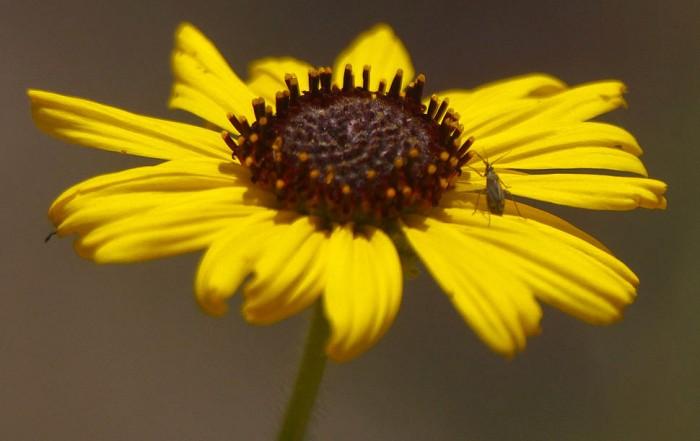 Цветущие дикие растения