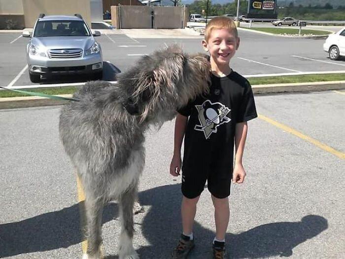 """50. """"Мой племянник встретил ирландского волкодава"""" волкодав, волкодавы, домашние питомцы, забавные собаки, собаки, собаки и дети, собаки и хозяева, фото собак"""