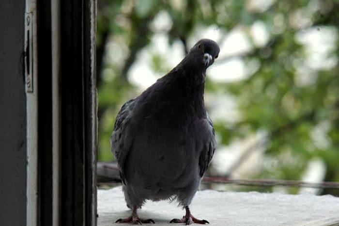 О птицах небесных и постоянстве в молитвах...