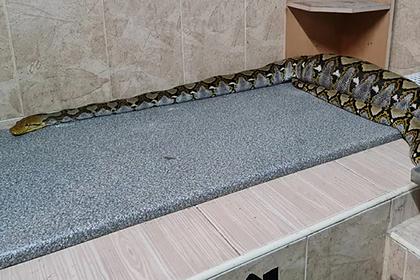 Девочка нашла пропавшего кота в желудке огромной змеи