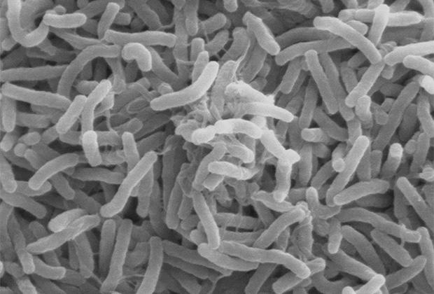 Грязный убийца. Как безобидный микроб веками убивал миллионы людей по всему миру болезни,медицина,наука,холера,эпидемии