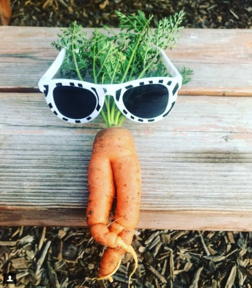 Морковка тоже может быть соблазнительной, и после просмотра этой фотоколлекции вы в этом убедитесь