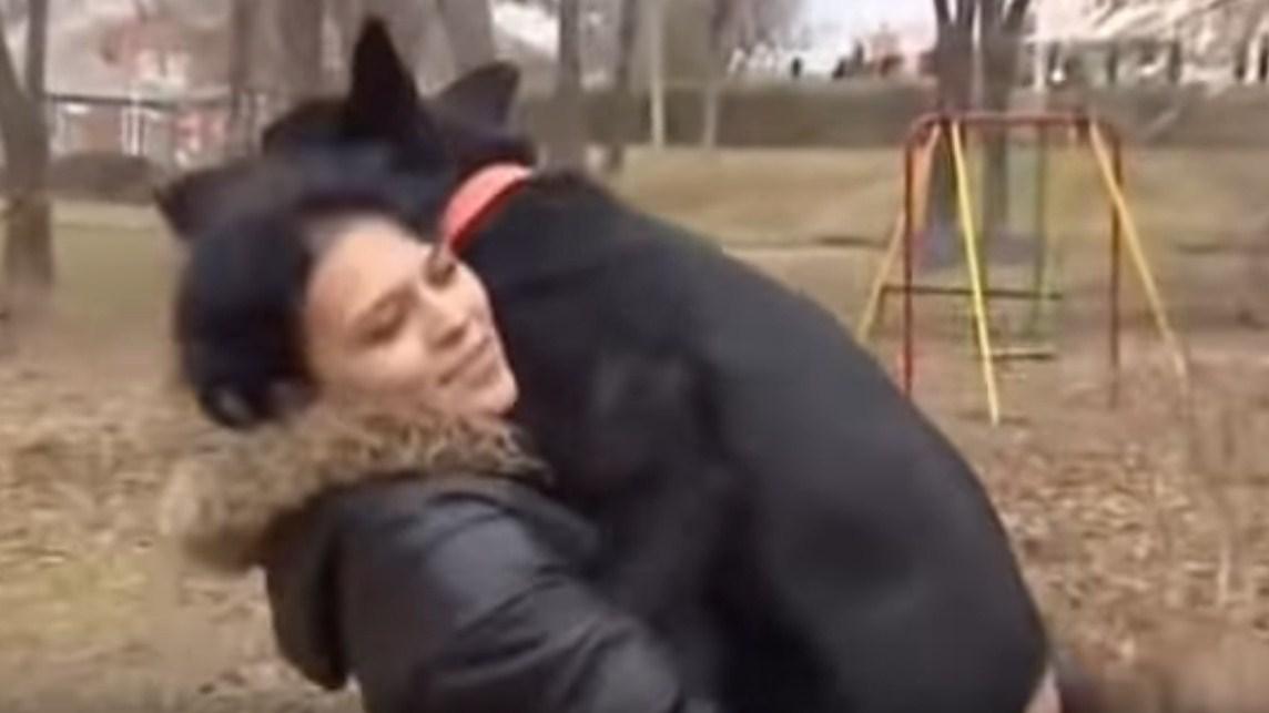 Эта собака пробежала 300 километров на сломанных лапах, чтобы вернуться к хозяйке